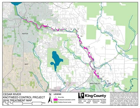 King County Washington Records Cedar River Knotweed Project In King County Washington King County