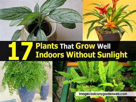 plants to grow indoors 17 plants that grow well indoors without sunlight