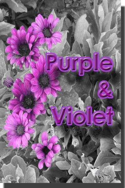 color purple meaning color purple violet color psychology personality meaning