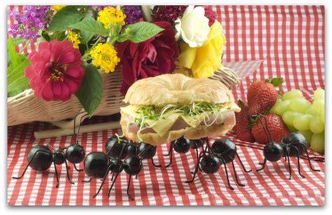 invasione di formiche in cucina formiche in casa come scacciarle in modo naturale