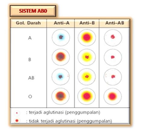 pemeriksaan golongan darah tes darah lengkap