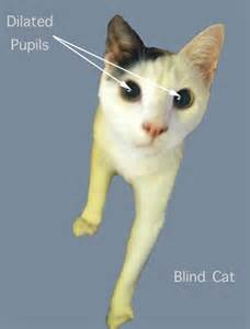 is my blind is my cat blind poc