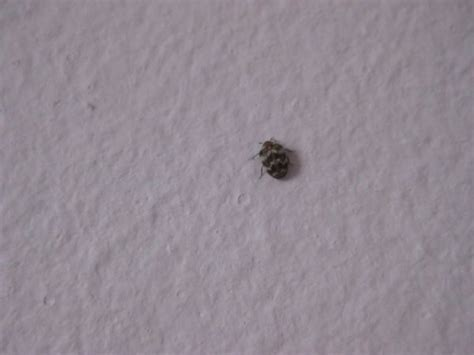 Black Bugs With Wings In Bedroom by Tell Me This Isn T What I It Is