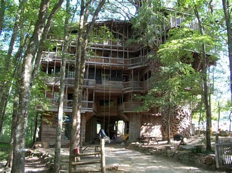 world s biggest tree house to see world s biggest tree house rosie meleady