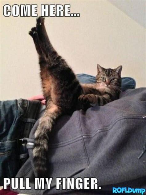Pull My Finger Meme - pull my finger human meme funny lol cat meme