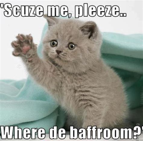 Cute Kitten Meme - funny cat memes you have to see cats pinterest
