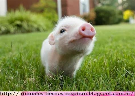 imagenes animales divertidos animales tiernos inspiran animales tiernos divertidos