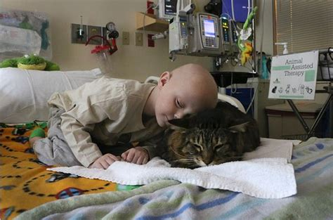 how to comfort a sick cat cat comforts patients at children s hospital life with cats