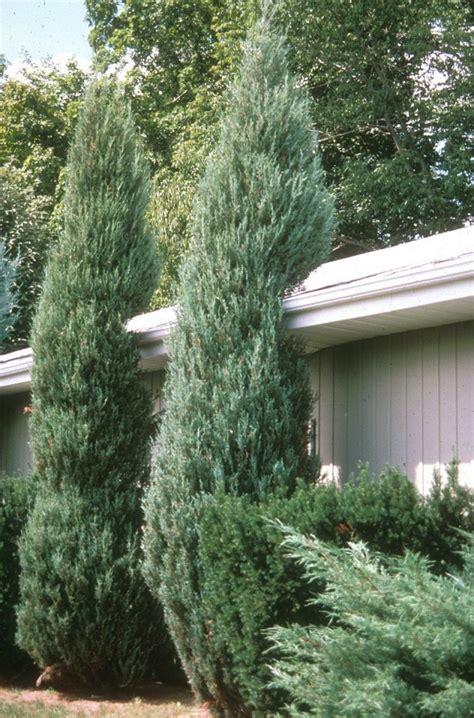 maintenance trees