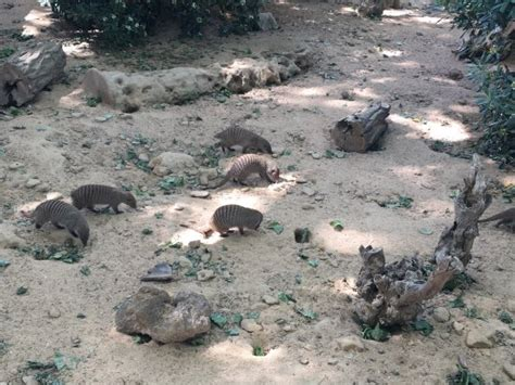 barcelona zoo reviews barcelona zoo picture of barcelona zoo barcelona