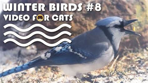 video for cats to watch winter birds 8 bird video for