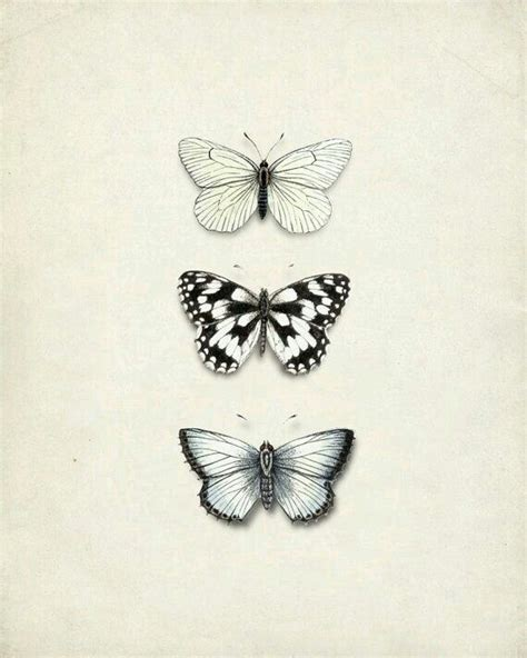 tattoo butterfly vintage cabbage white butterfly drawing www pixshark com