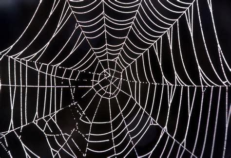 The Web spider web