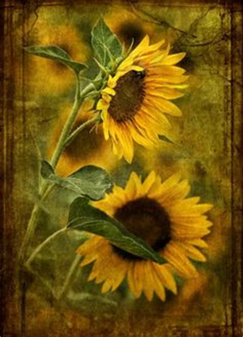 Sunflower Kuaci Bunga Matahari 1000 G 1000 images about sunflower smitten on sunflowers sunflower paintings and sun flowers