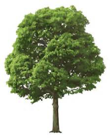 tree image realistic tree vector ai svg eps vector free download