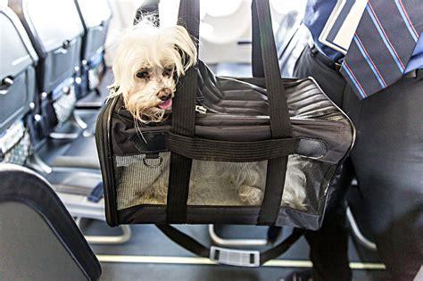 pet air travel from vet dr evan antin