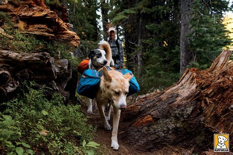 packs and dogs ruffwear approach pack hiking secure adjustable padded