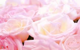 pretty pictures roses images pretty roses hd wallpaper and background