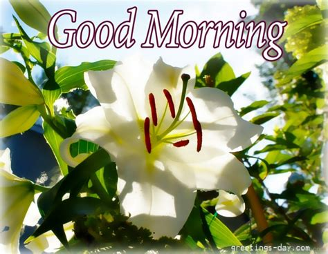 morning image morning wishes with flowers pictures images photos
