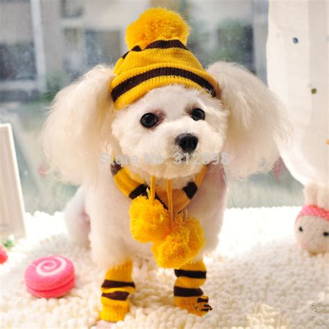 accessories for puppies winter pet puppy accessories for dogs pink yellow rainbow striped hats scarf socks