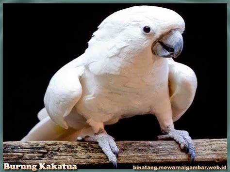 Kaos Burung Kakatua Dan Nuri Pb928 by 1000 Ide Tentang Burung Kakatua Di Burung