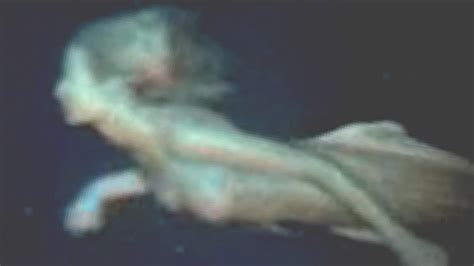 mermaid body found real mermaid body found alive filmed by diver