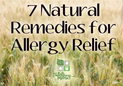 25 b 228 sta home remedies for allergies id 233 erna p 229