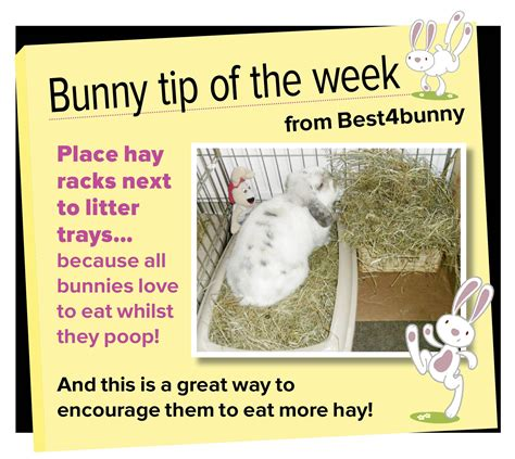 Must For The Week The House Bunny by Bunny Tip Week 14 Place Hay Racks Next To Litter Trays