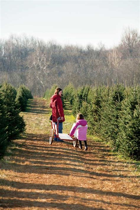 home based business christmas tree farm farm and garden