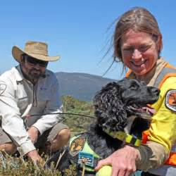 dogs in national parks dogs trialled by parks to detect hawkweed in alpine national parks abc news