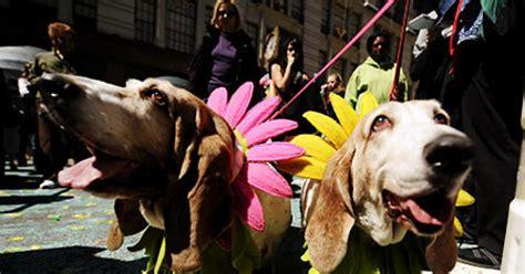 macys flower show collars pet lovers  fur  fun time