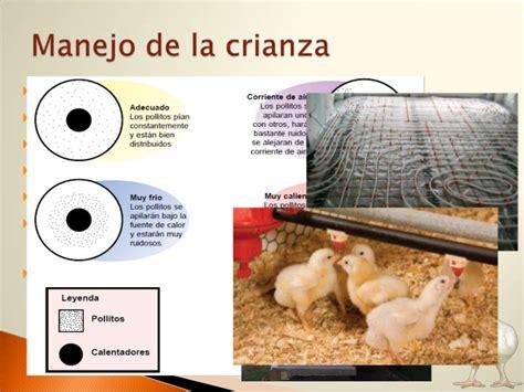 cadena productiva avicola cadena productiva carnica avicola