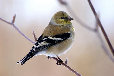 song birds daniel j marquis photography daniel j