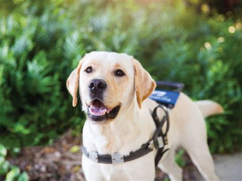 southeastern guide dogs the summer 50