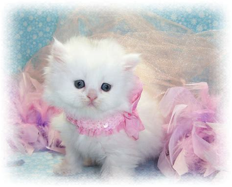 beautiful kittens 30 lovely cute cats pictures