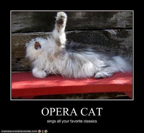 Singing Cat Meme - opera cat sings your favorites lolcats pinterest