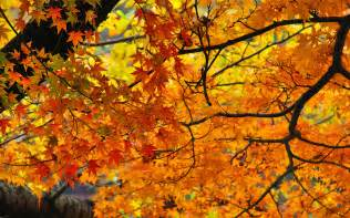 In Fall how to have the best fall ever travel leisure
