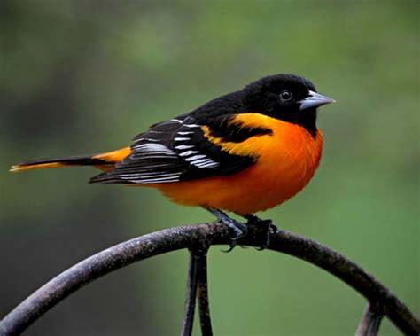 beautiful birds phots the power of color 40 superbly colorful bird photos designbeep