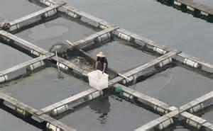 Fish farms contribute to rising sea levels modern farmer