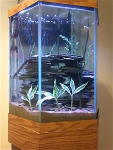 aquascaping tall tanks 1000 images about tanks on pinterest aquarium aquascaping and fish tanks