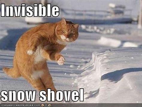 Best Cat Memes - best cat memes ever emirates woman