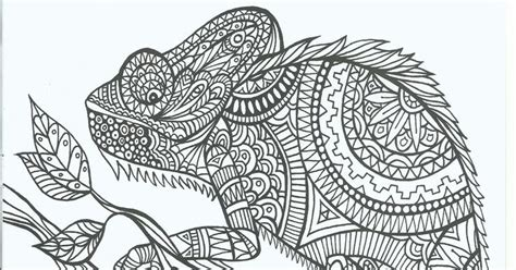 coloring pages for adults chameleon coloring page world chameleon portrait
