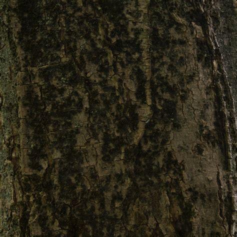 wallpaper pohon coklat lumut lumut pohon coklat hijau wallpaper sc ipad tablet