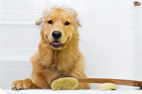 is a dogs clean how to keep your home clean and hygienic when you own a pets4homes