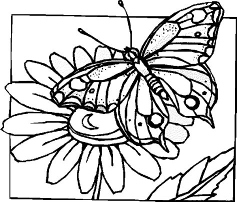 coloring pages of flowers and butterflies free coloring pages of butterfly flower