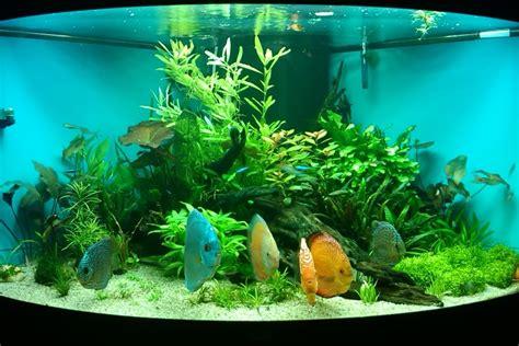 juwel trigon 350 beleuchtung juwel trigon 350 uk aquatic plant society