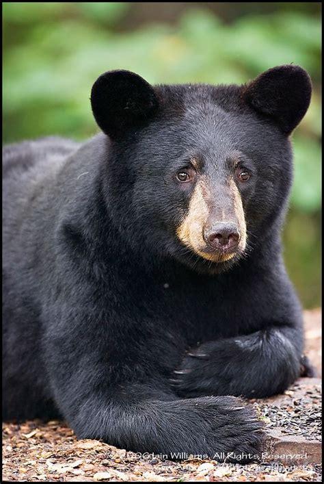 Another Gauffre Ae A Ae Like With This Cornelia Ruched Bag by As 25 Melhores Ideias De Black No Ursos