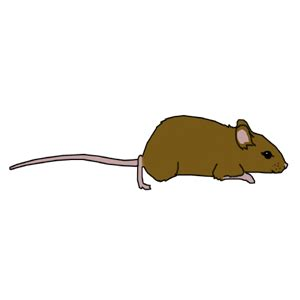 Blind Rat Brown Mouse Clipart Cliparts Of Brown Mouse Free Download