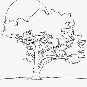 oak tree coloring download oak tree coloring