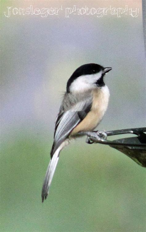 pin by june on birds pinterest